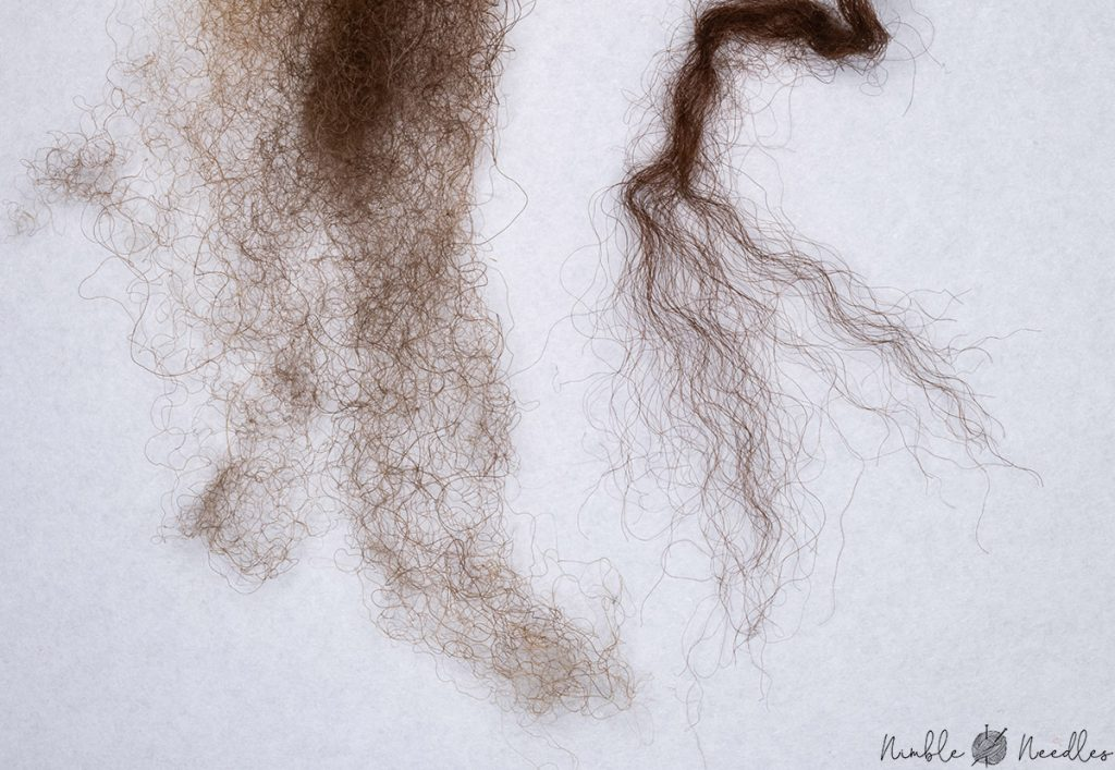 comparing the crimp of alpaca with sheep wool - a macro shot